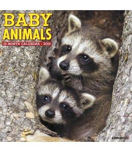 Willow Creek Baby Animals Kalender 2019
