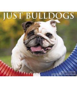Willow Creek Engelse Bulldog Kalender 2019 Boxed