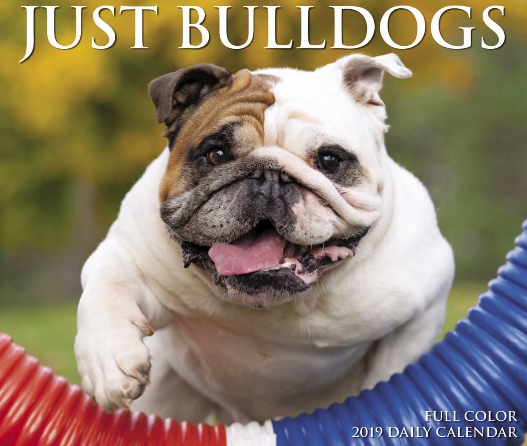Engelse Bulldog Kalender 2019 Boxed