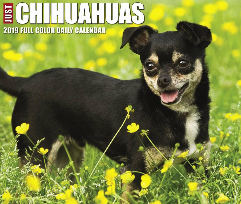 Chihuahua Kalender 2019 Boxed