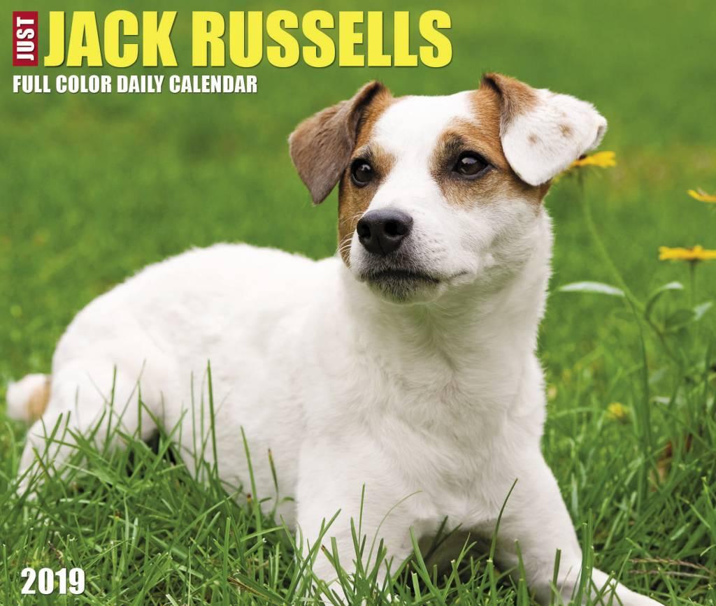 Jack Russell Terrier Kalender 2019 Boxed