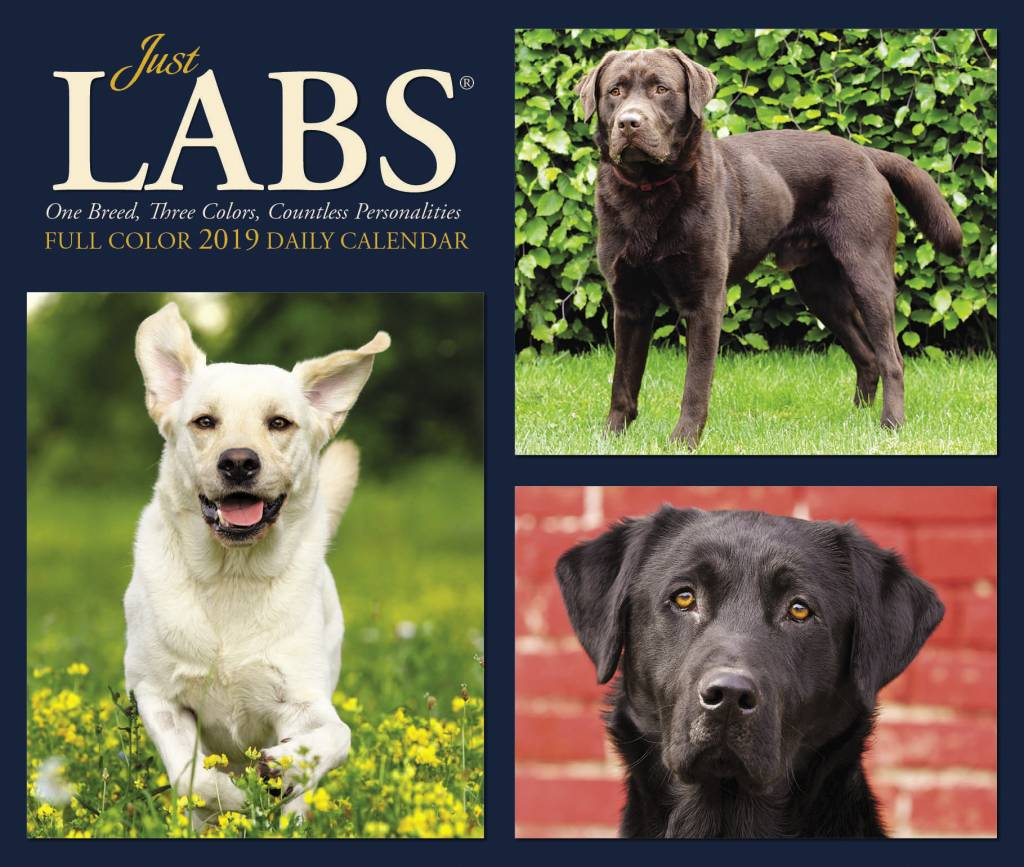 Labrador Retriever Kalender 2019 Boxed