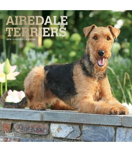 Browntrout Airedale Terrier Kalender 2019