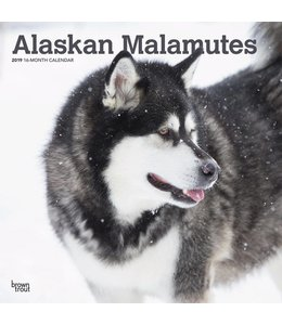 Browntrout Alaskan Malamute Kalender 2019