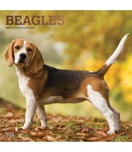 Browntrout Beagle Kalender 2019