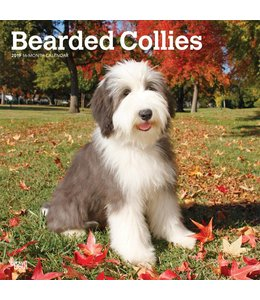 Browntrout Bearded Collie Kalender 2019