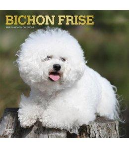 Browntrout Bichon Frise Kalender 2019