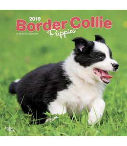 Browntrout Border Collie Kalender Puppies 2019