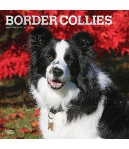 Browntrout Border Collie Kalender 2019