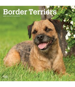 Browntrout Border Terrier Kalender 2019