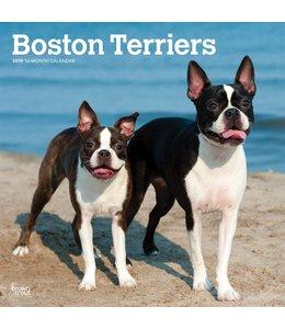 Browntrout Boston Terrier Kalender 2019