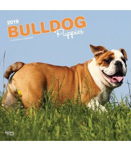 Browntrout Engelse Bulldog Kalender Puppies 2019