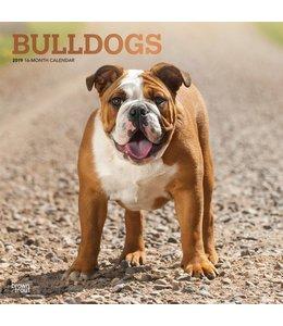 Browntrout Engelse Bulldog Kalender 2019