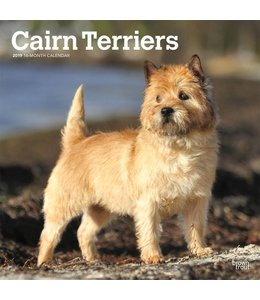 Browntrout Cairn Terrier Kalender 2019