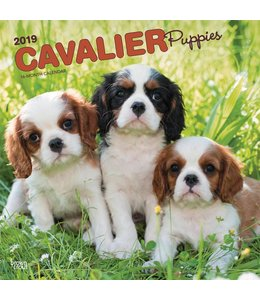 Browntrout Cavalier King Charles Spaniel Kalender Puppies 2019