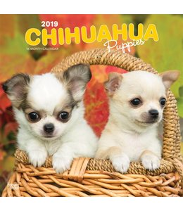 Browntrout Chihuahua Kalender Puppies 2019