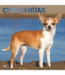 Browntrout Chihuahua Kalender 2019