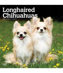 Browntrout Chihuahua Kalender Langhaar 2019
