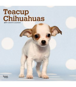 Browntrout Chihuahua Kalender Teacup 2019