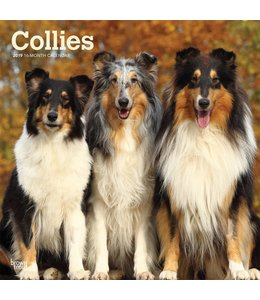 Browntrout Schotse Herder / Collie Kalender 2019