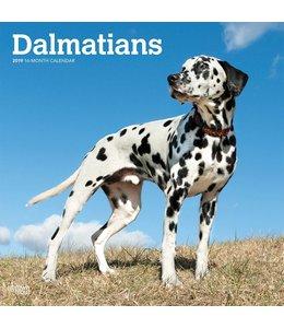 Browntrout Dalmatier Kalender 2019