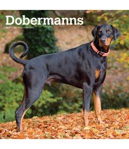Browntrout Dobermann Kalender 2019