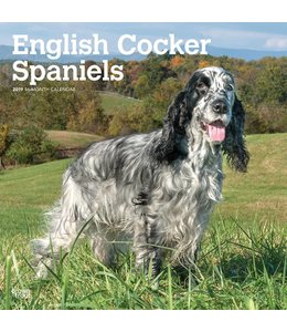 Browntrout Engelse Cocker Spaniel Kalender 2019