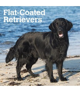 Browntrout Flatcoated Retriever Kalender 2019
