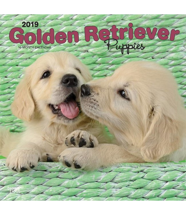 Browntrout Golden Retriever Kalender Puppies 2019 Browntrout