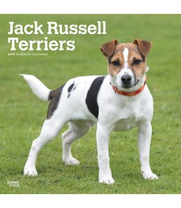 Browntrout Jack Russell Terrier Kalender 2019