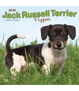 Browntrout Jack Russell Terrier Puppies Kalender 2019