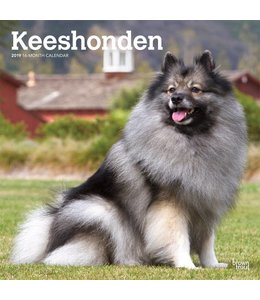 Browntrout Keeshond Kalender 2019