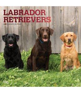 Browntrout Labrador Retriever Mixed Kalender 2019