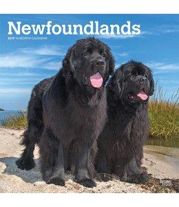 Browntrout Newfoundlander Kalender 2019