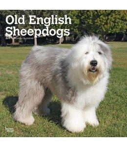 Browntrout Bobtail / Old English Sheepdog Kalender 2019