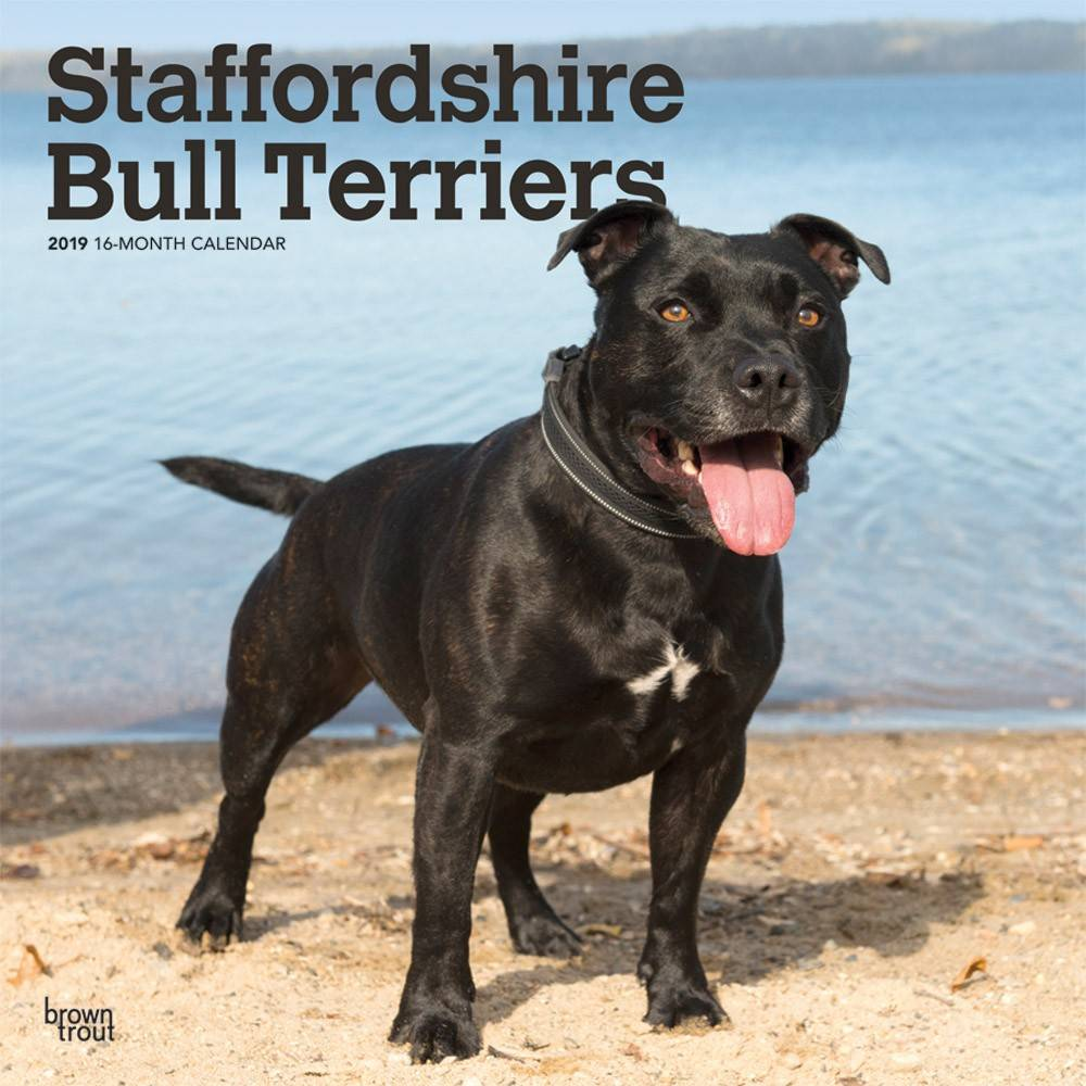 Staffordshire Bull Terrier Kalender 2019 Browntrout