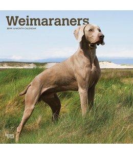 Browntrout Weimaraner Kalender 2019