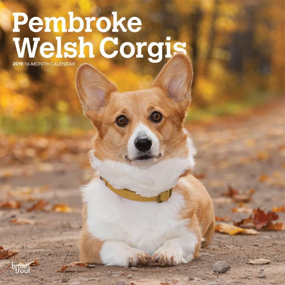 Welsh Corgi Pembroke Kalender 2019 Browntrout