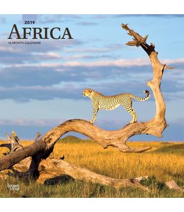 Browntrout Africa Kalender 2019