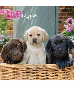 Browntrout Labrador Retriever Puppies Kalender 2019