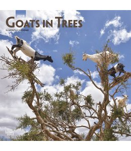 Browntrout Goats in Trees Kalender 2019