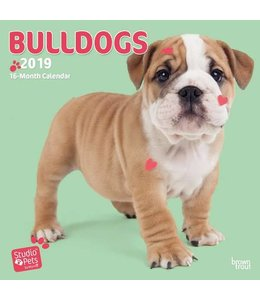 Browntrout Engelse Bulldog Kalender Myrna 2019
