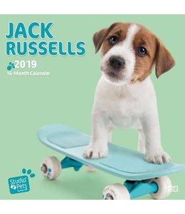 Browntrout Jack Russell Terrier Kalender 2019 Myrna