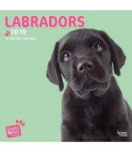 Browntrout Labrador Retriever Kalender 2019 Myrna