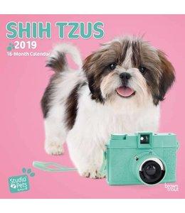 Browntrout Shih Tzu Kalender 2019 Myrna