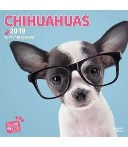 Browntrout Chihuahua Kalender 2019 Myrna