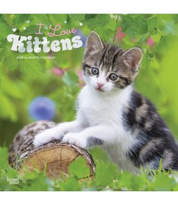 Browntrout I Love Kittens Kalender 2019