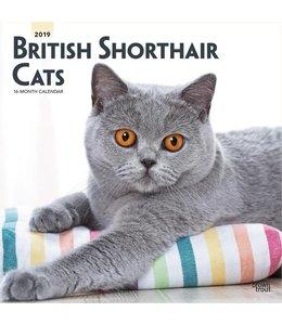 Browntrout Brits Korthaar Kalender 2019