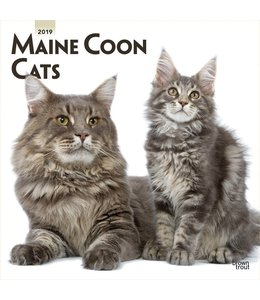 Browntrout Maine Coon Kalender 2019