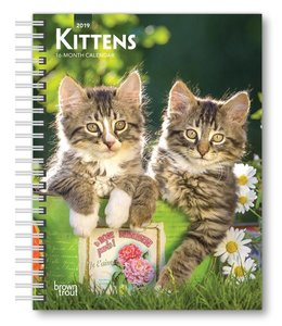 Browntrout Kittens Agenda 2019
